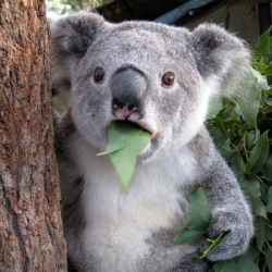 SugarPlumFairy