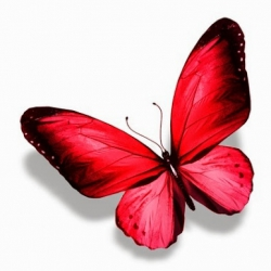 Angry_butterfly