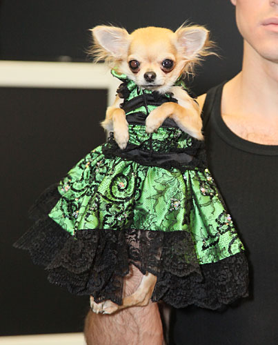 Pets Fashion Week Russia