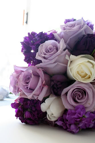 Beautiful Purples