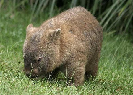Wally the Waxing Wombat