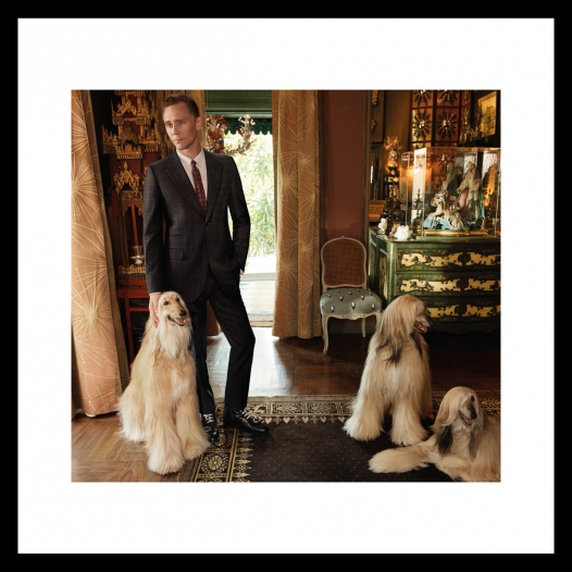 New Gucci Tailoring campaign featuring Tom Hiddleston.