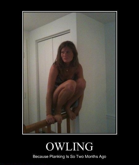 Owling is the New Planking, People